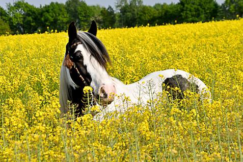 Pferdefotografie-086.jpg