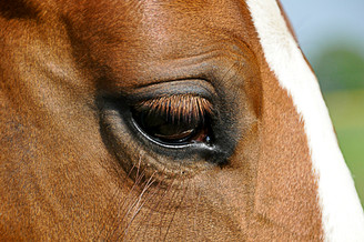 Pferdefotografie-082.jpg