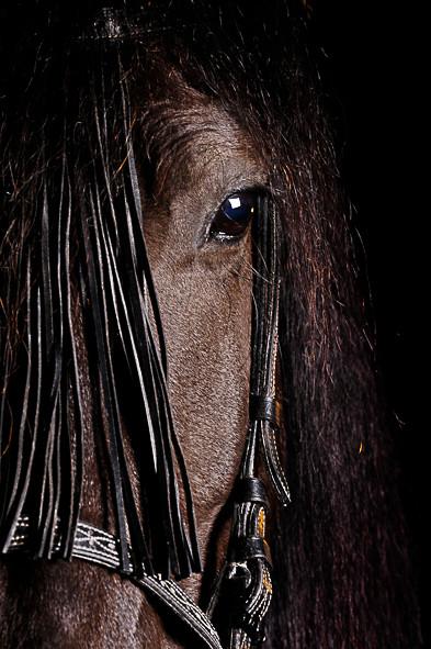 Pferdefotografie-078.jpg