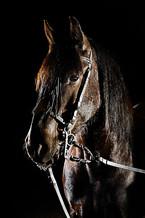 Pferdefotografie-076.jpg