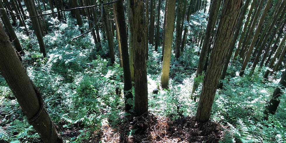 ワークショップ・キリキリ国 奥多摩の林業を知る祭り