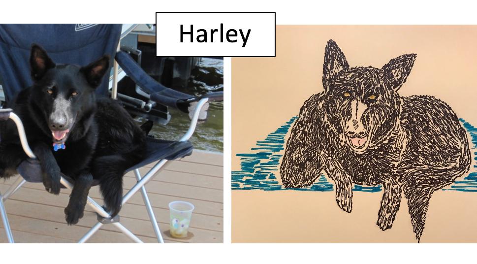 Harley by Deb Charlton