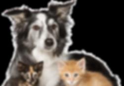 dogcat3.png