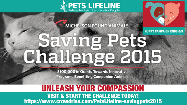Join the Saving Pets Challenge!