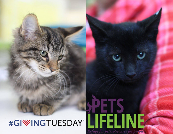 #GivingTuesday Story: Stormy & Rain