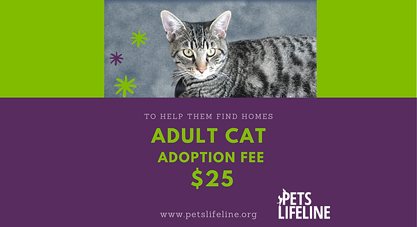 $25 adoption fee home page slider (2).png