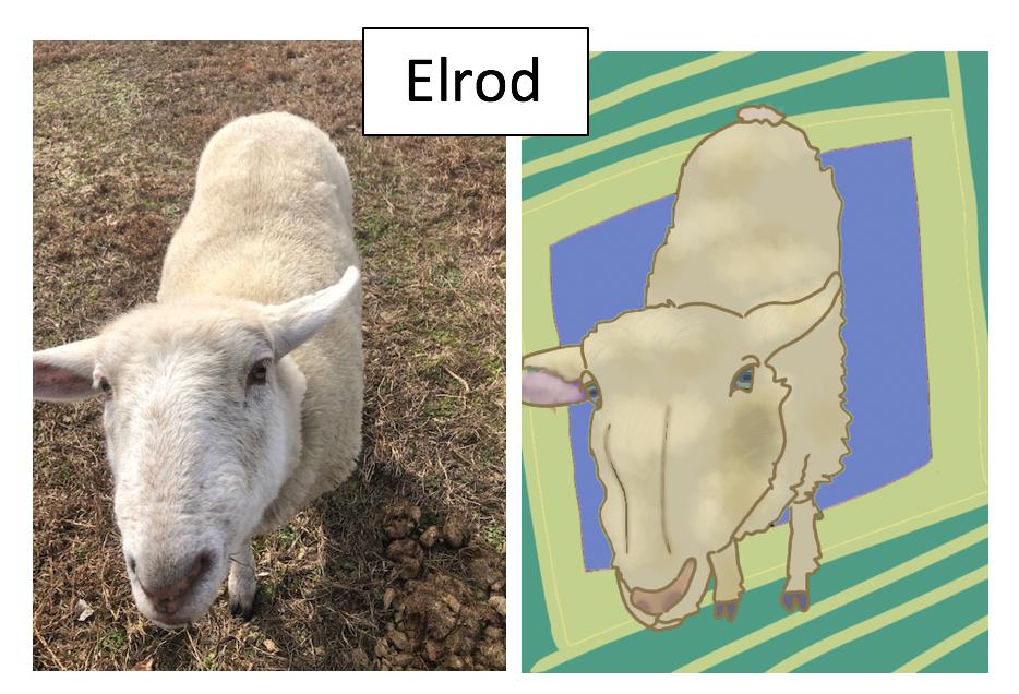 Elrod by Jane Katherine Salter