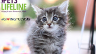 #GivingTuesday Story: Little Bitty