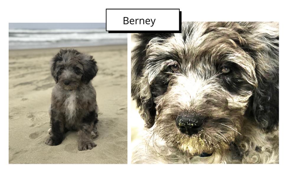 Berney by Marty Orgel