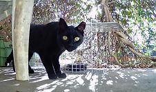 Black feral cat