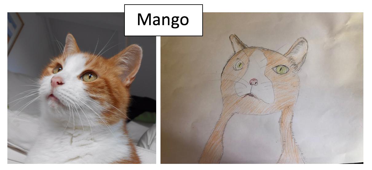 Mango by a PLL Summer Camper