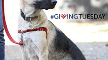 #GivingTuesday Story: Zoey