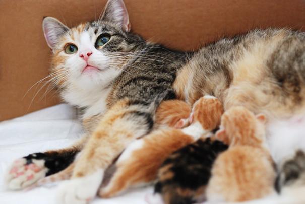 Help Mrs. Bean & Join the Kitten Brigade