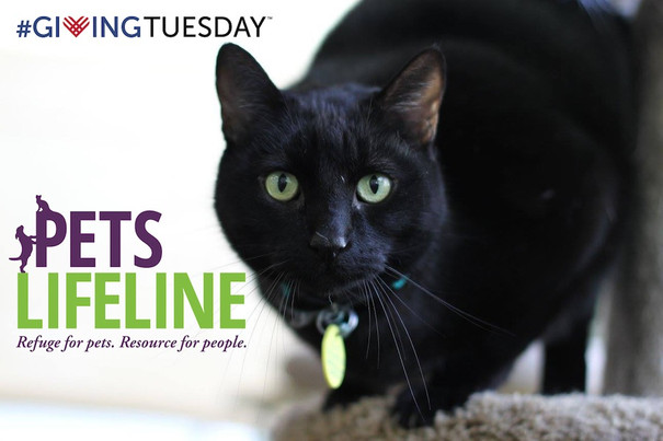 #GivingTuesday Story: Indy
