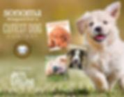 Cutest-Dog-800x600-570x450.jpg