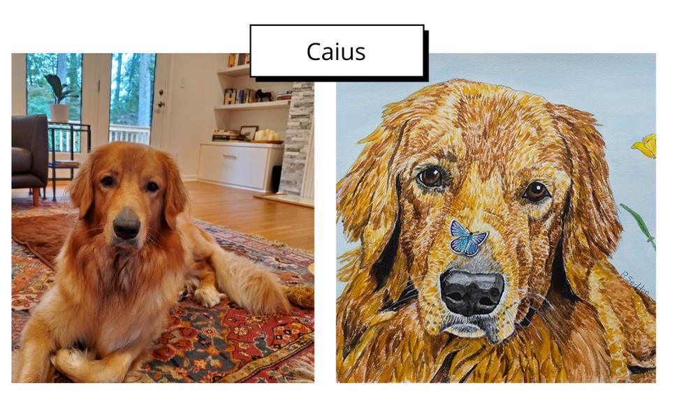 Caius by Patricia Seddon
