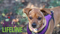 #GivingTuesday Story: Minnie