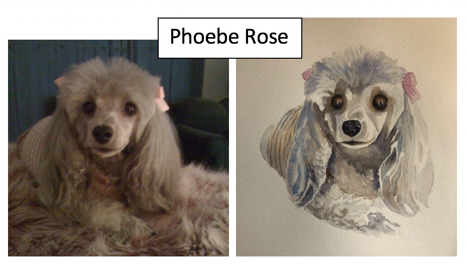 Phoebe Rose by Pip Tetlow
