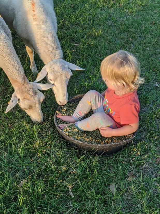 Elaina feeding her sheep.