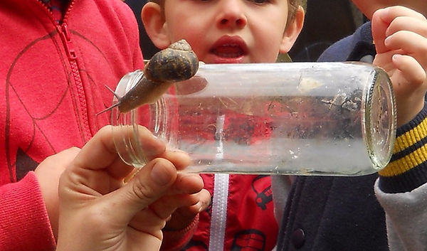 snail watching and learning