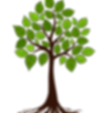 FAVPNG_tree-root-branch_AcRpfd00_edited.