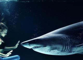 Taming Your Inner Shark