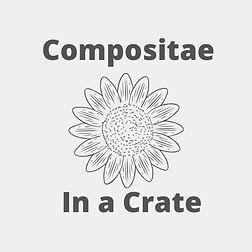 Compositae_edited_edited.jpg