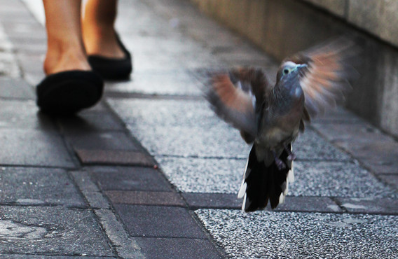 Wings and Shoes