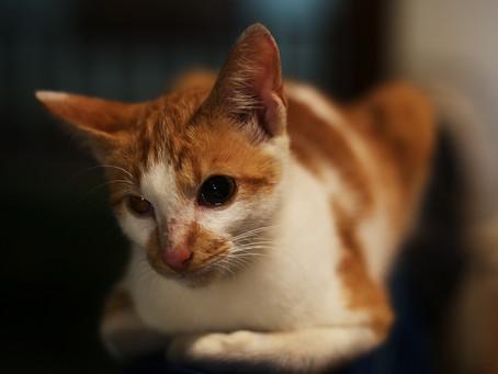 Mitsu - la Petite Chatte du Maroc Partie 1