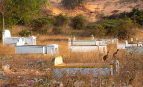 Cemetery Birds