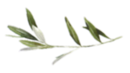 white marble_w olive branch_color.png