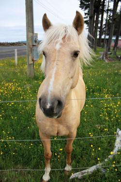 DM_nature_animals_horses_731