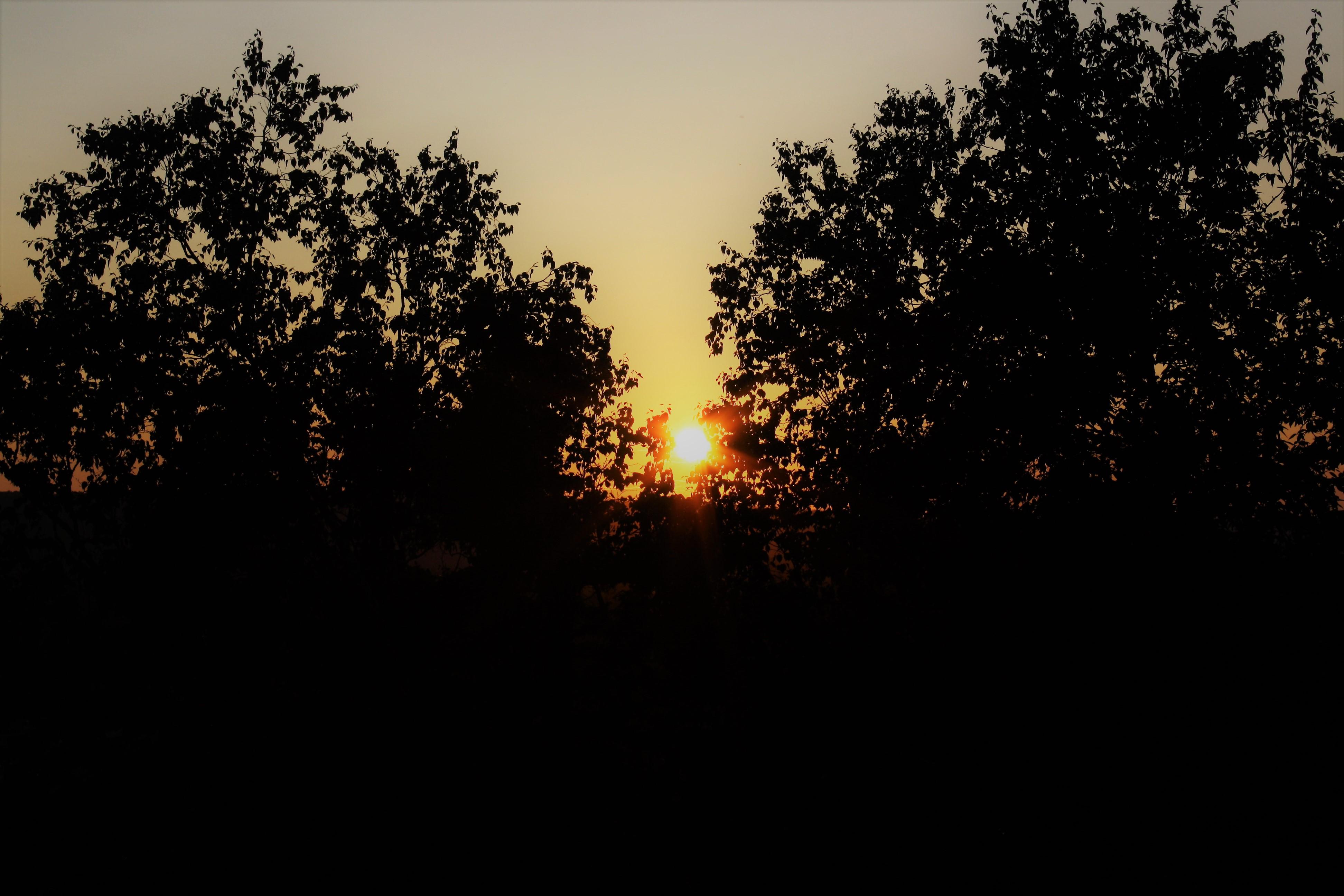 DM_nature_sunsetssunrises_588