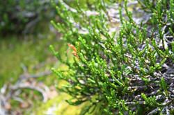 DM_nature_foliage_plants_6741