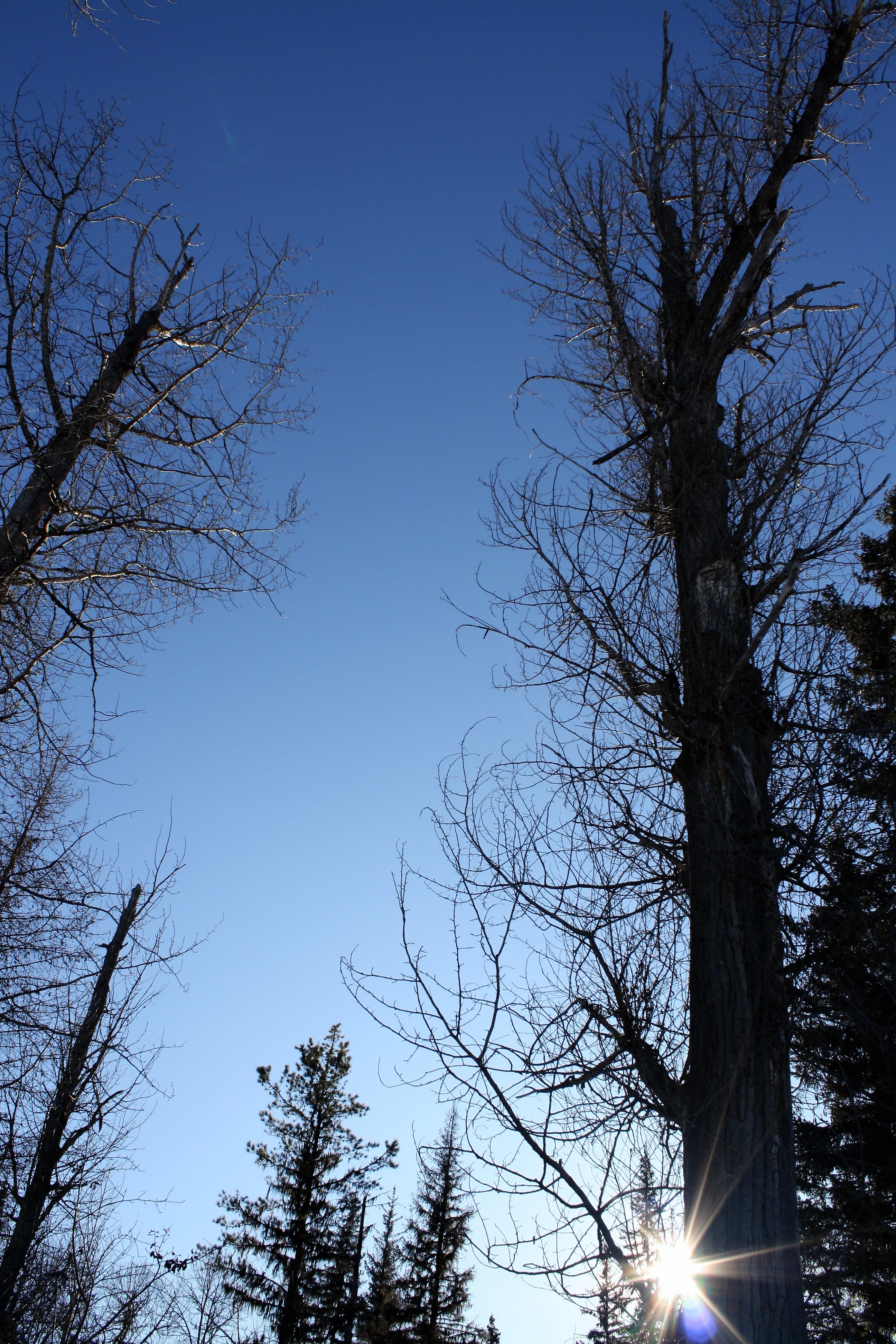 DM_nature_foliage_trees_0898