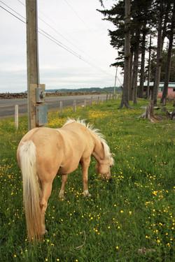 DM_nature_animals_horses_734