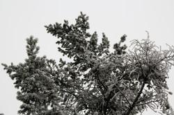 DM_nature_foliage_trees_0604
