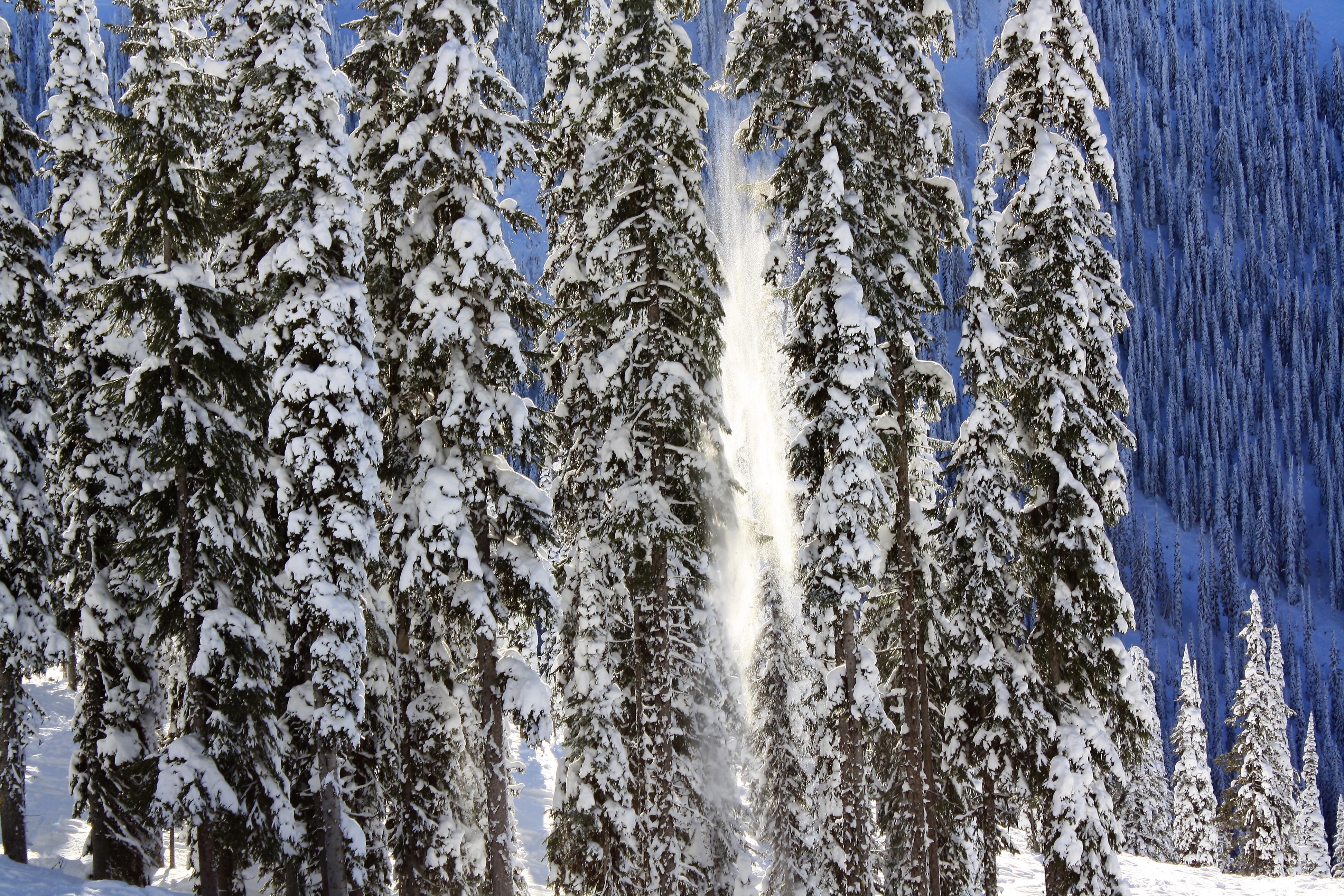DM_nature_winter_kootenays_7996