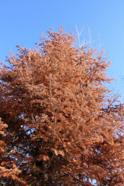 DM_nature_foliage_trees_0881