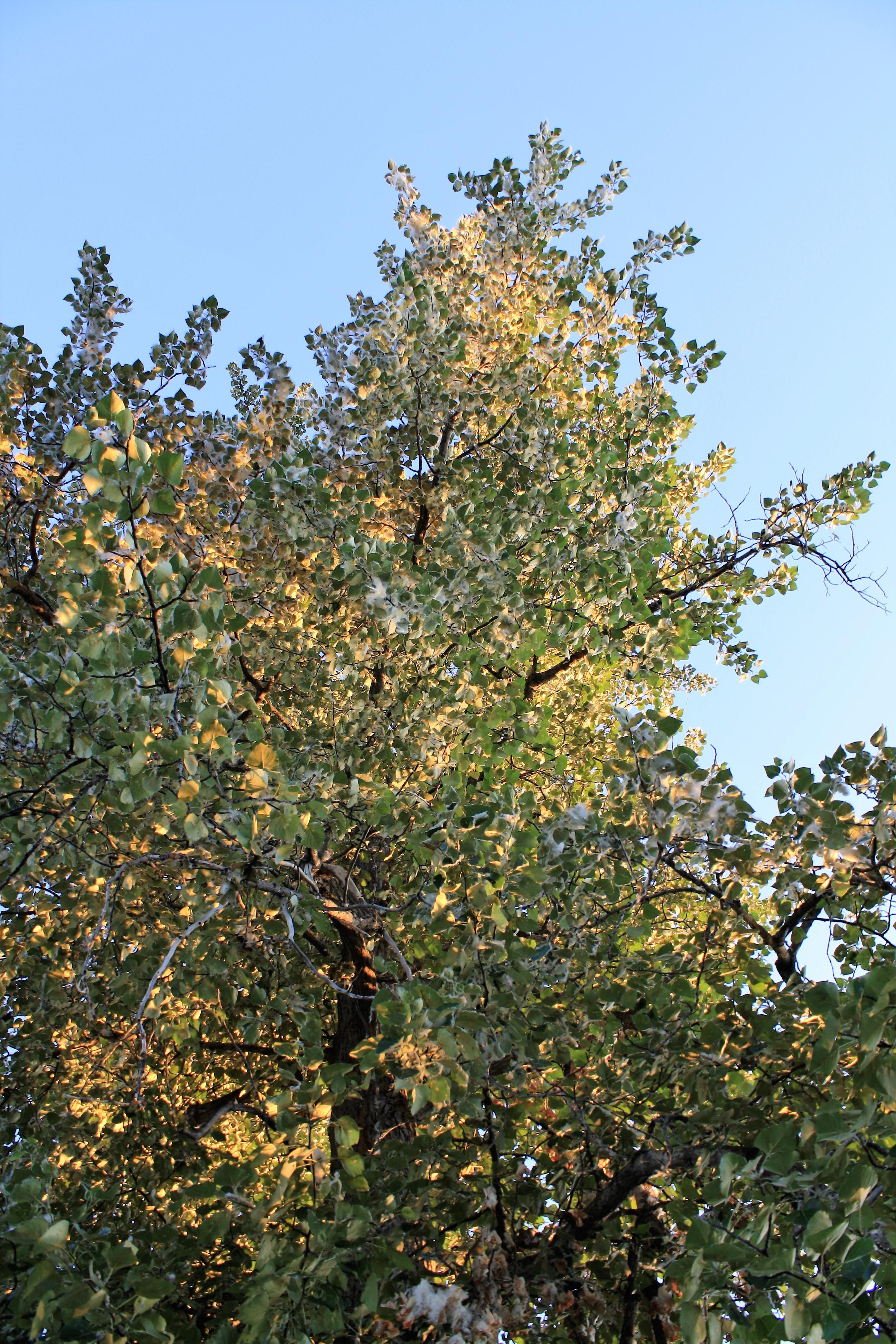 DM_nature_foliage_trees_342
