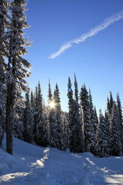 DM_nature_winter_kootenays_1771