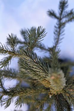 DM_nature_foliage_trees_0863