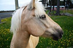DM_nature_animals_horses_730
