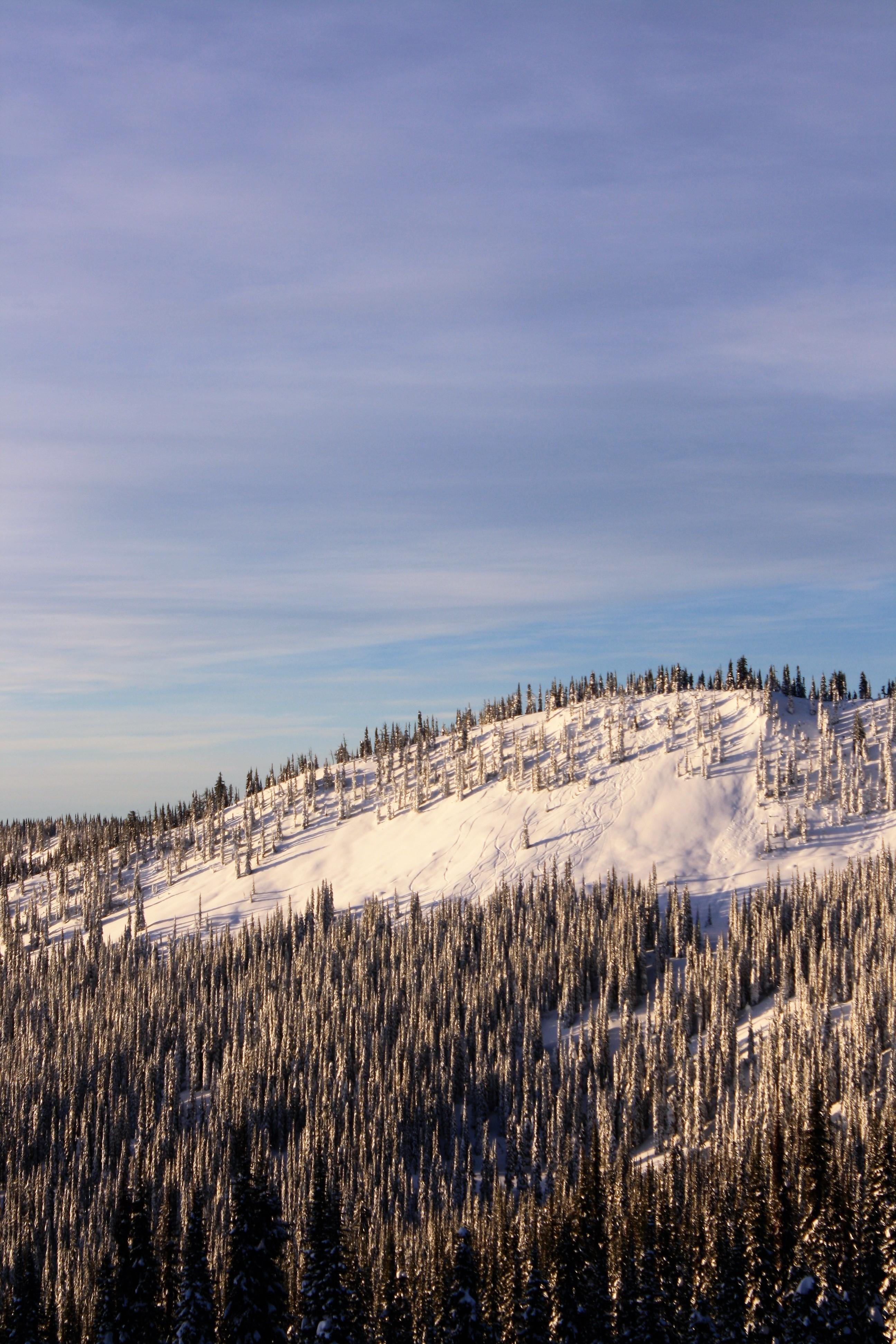 DM_nature_winter_kootenays_1742