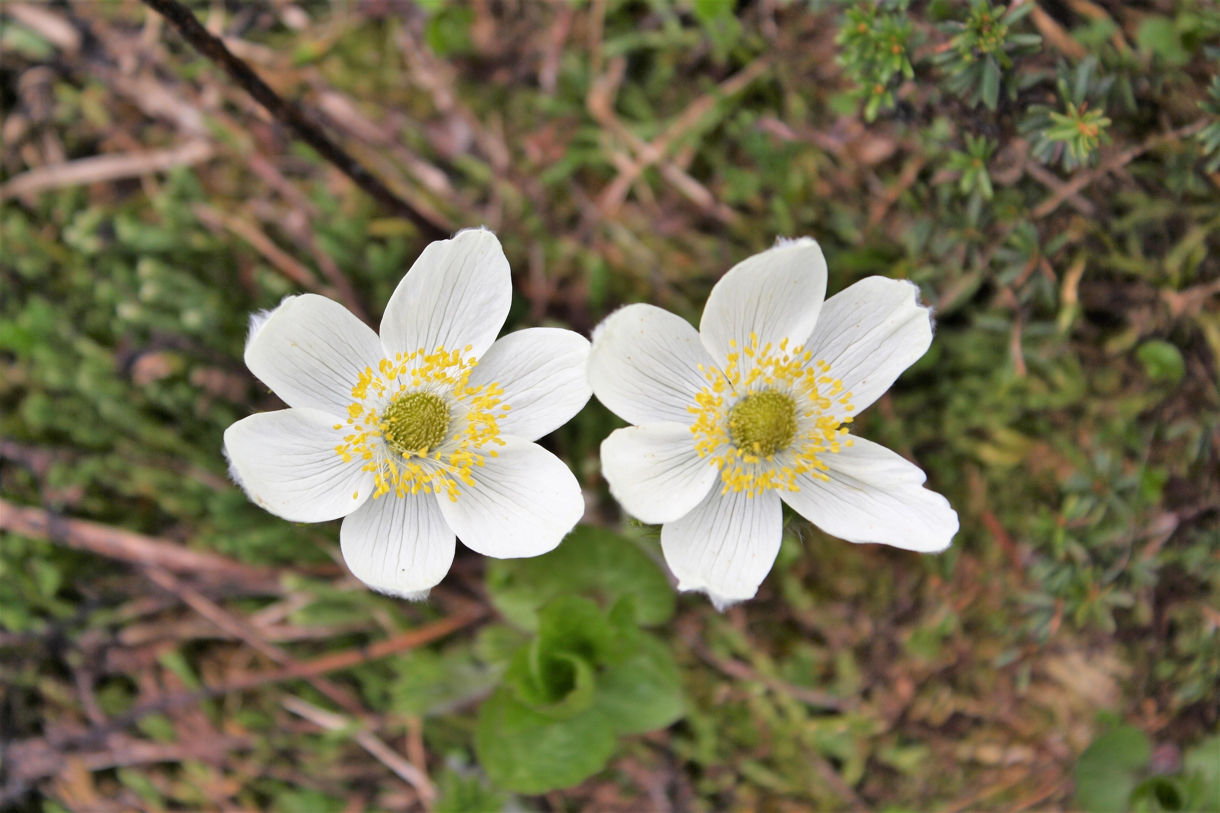 DM_nature_foliage_352