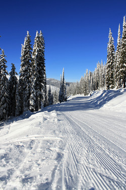 DM_nature_winter_kootenays_7995