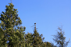 DM_nature_animals_birds_196