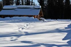 DM_nature_winter_0902