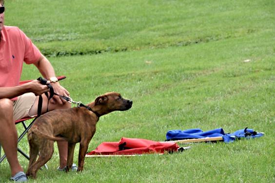The neighbor's plod hound