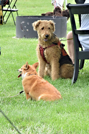 Canine guests